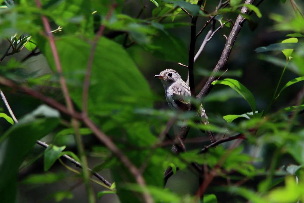 高原の幼鳥達(2014年7月12日)_f0235311_22491323.jpg