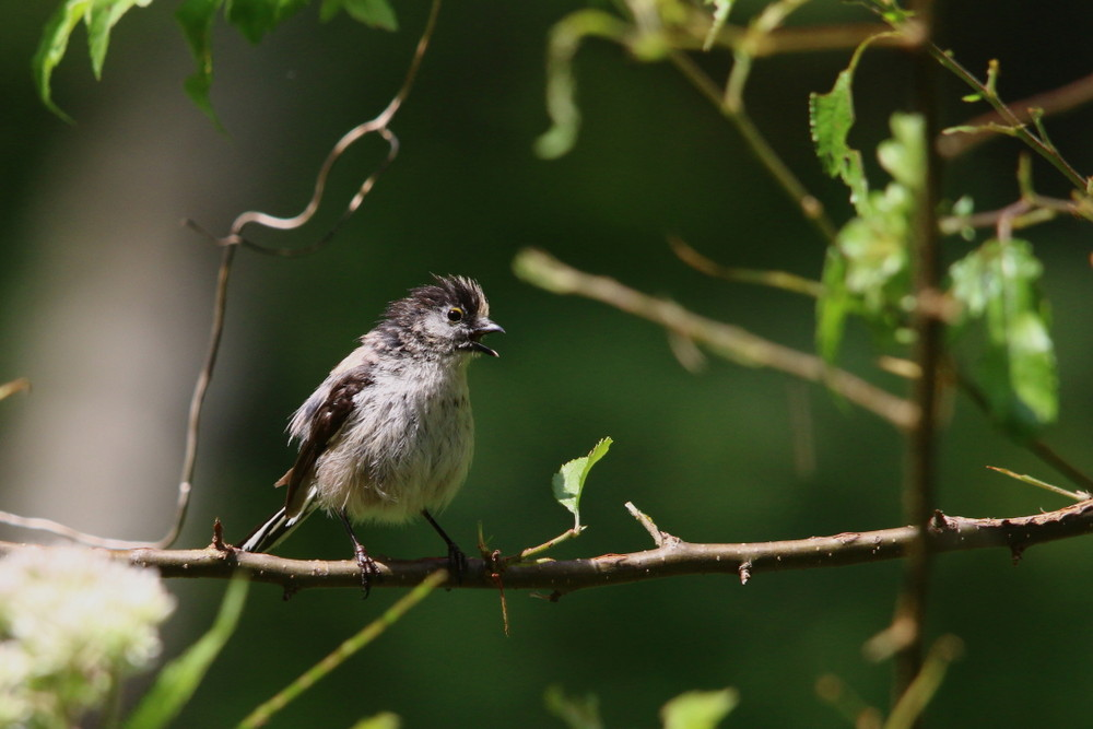 高原の幼鳥達(2014年7月12日)_f0235311_22573810.jpg
