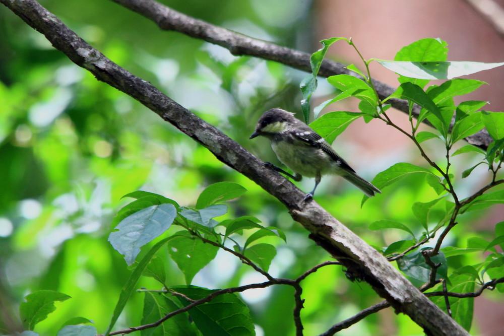 高原の幼鳥達(2014年7月12日)_f0235311_22583296.jpg