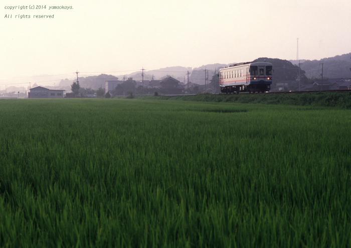 夏の朝の田圃で_d0309612_034655.jpg