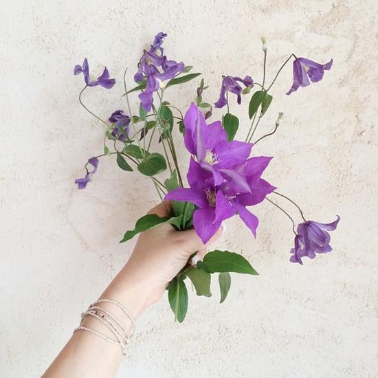 7月の庭花_f0032814_22371148.jpg