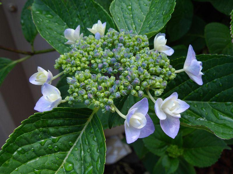 ガーデンの発生遺伝学_c0025115_2145551.jpg