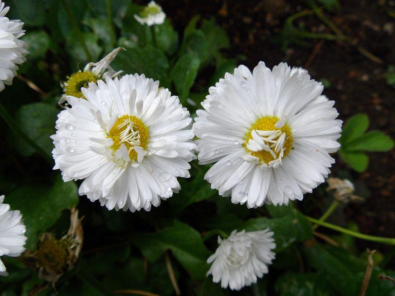 ガーデンの発生遺伝学_c0025115_21491140.jpg