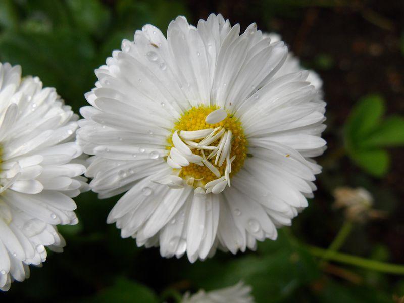 ガーデンの発生遺伝学_c0025115_21555326.jpg