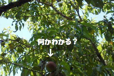 e0234016_2014229.jpg