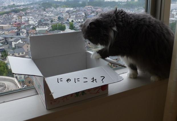 箱ねこができあがるまで_e0237625_18443629.jpg