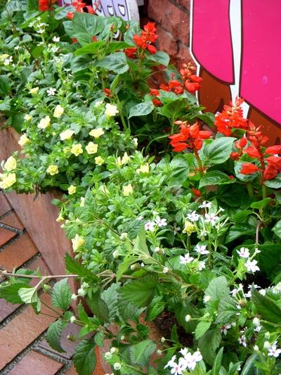 長谷川町子美術館、夏の庭。。。_a0229658_7333716.jpg