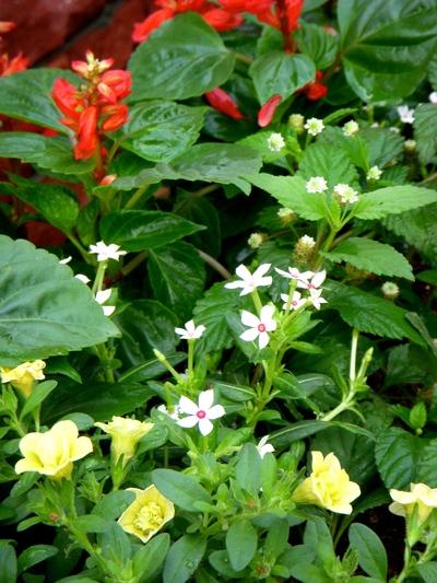 長谷川町子美術館、夏の庭。。。_a0229658_7455075.jpg