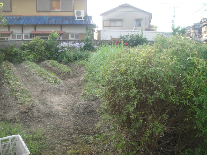 2年間水替えなしでのメダカ飼育     by     (TATE-misaki)_c0108460_21263207.jpg