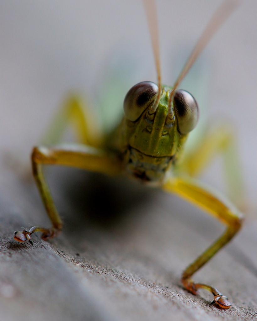 虫やキノコなど_c0305565_18244293.jpg