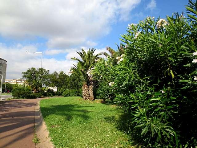 セルバンテス公園へ散歩に_b0064411_06203012.jpg