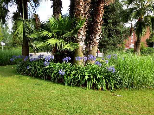 セルバンテス公園へ散歩に_b0064411_06203033.jpg