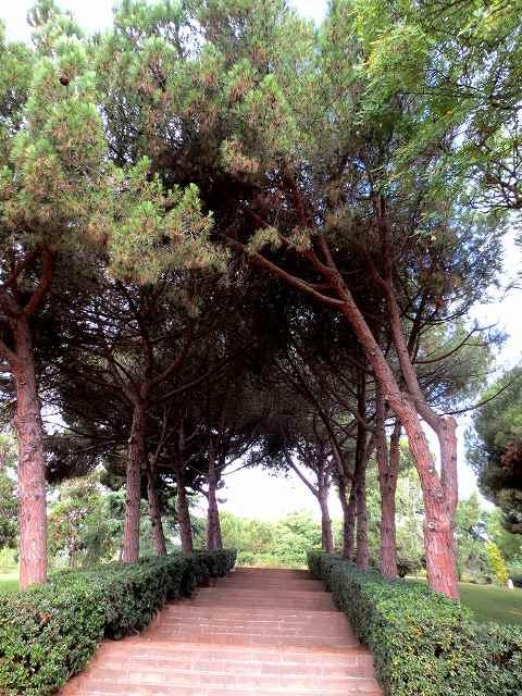 セルバンテス公園へ散歩に_b0064411_06275223.jpg