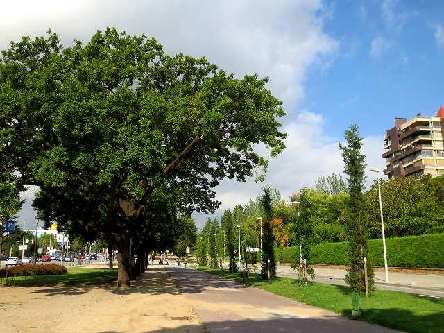 セルバンテス公園へ散歩に_b0064411_06275226.jpg