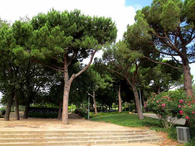 セルバンテス公園へ散歩に_b0064411_06275230.jpg