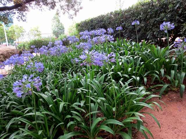 セルバンテス公園へ散歩に_b0064411_06275238.jpg