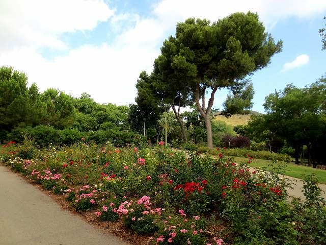 セルバンテス公園へ散歩に_b0064411_06275343.jpg