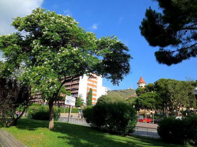 セルバンテス公園へ散歩に_b0064411_06311331.jpg