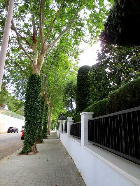 セルバンテス公園へ散歩に_b0064411_06331918.jpg