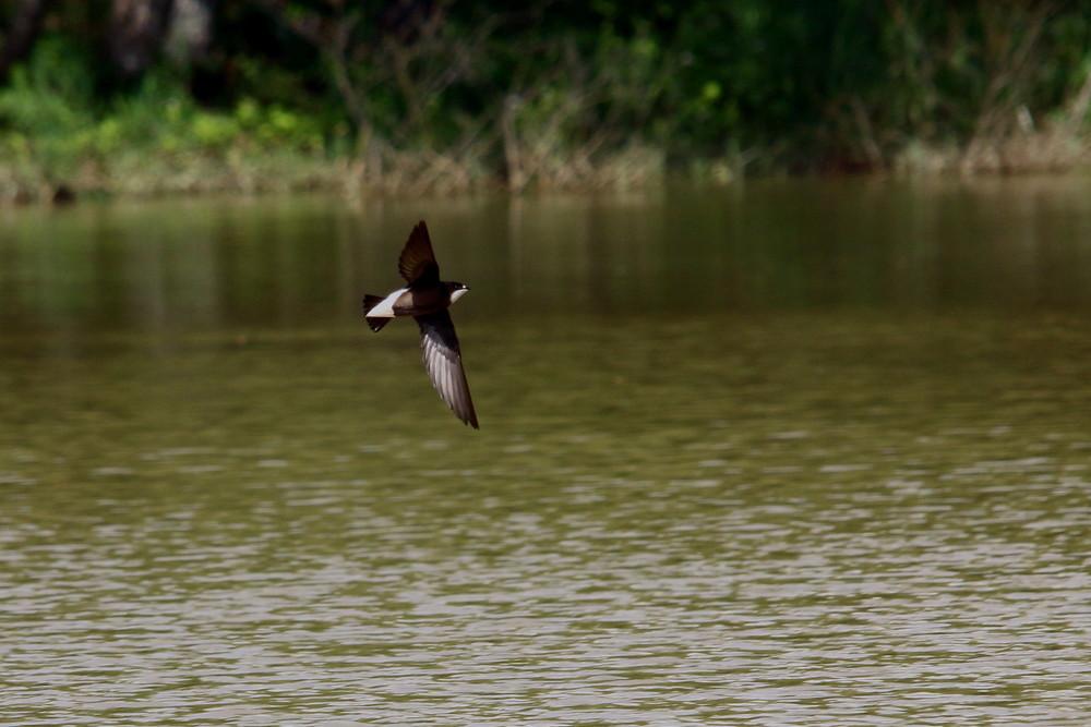 高原の鳥(2014年7月12日)_f0235311_9124214.jpg