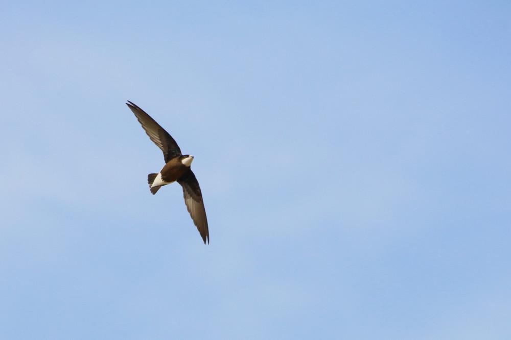 高原の鳥(2014年7月12日)_f0235311_913295.jpg