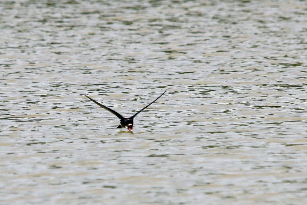 高原の鳥(2014年7月12日)_f0235311_914762.jpg
