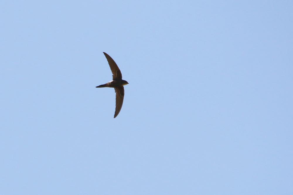 高原の鳥(2014年7月12日)_f0235311_972119.jpg