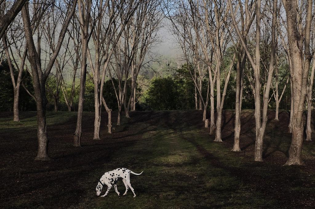 農場の朝 by New FUJINON 18~135mm_f0050534_23494769.jpg