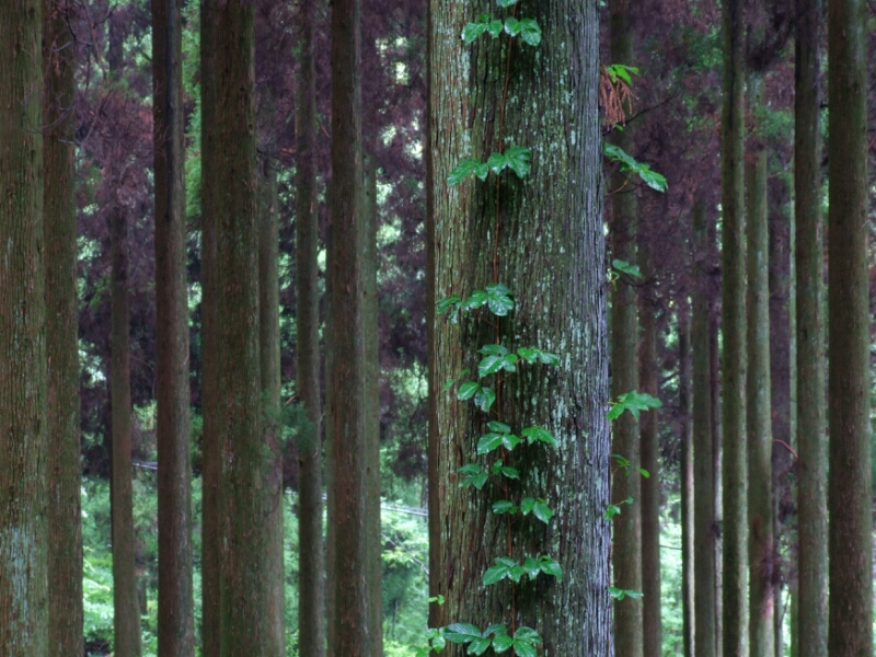 森の憂鬱_b0188175_2035789.jpg