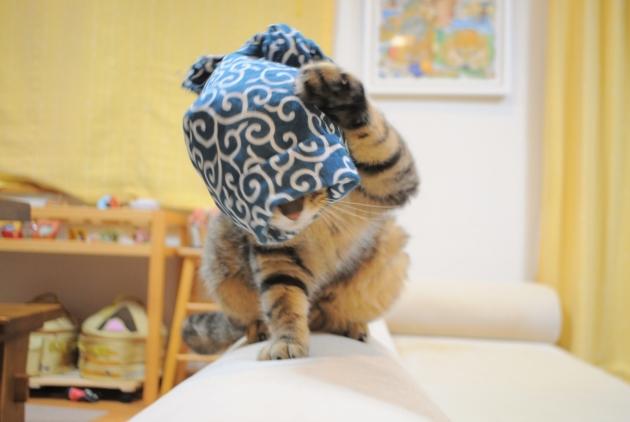 猫で遊ぶ_a0126590_08380169.jpg