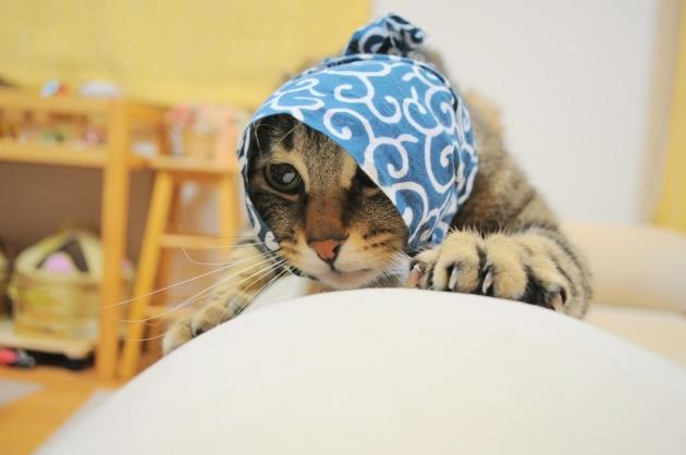 猫で遊ぶ_a0126590_08382799.jpg