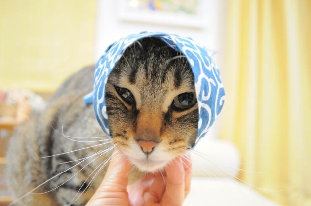 猫で遊ぶ_a0126590_08384636.jpg