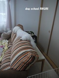RIKURI幼稚園 - 土曜日編 -_a0284100_133712.jpg