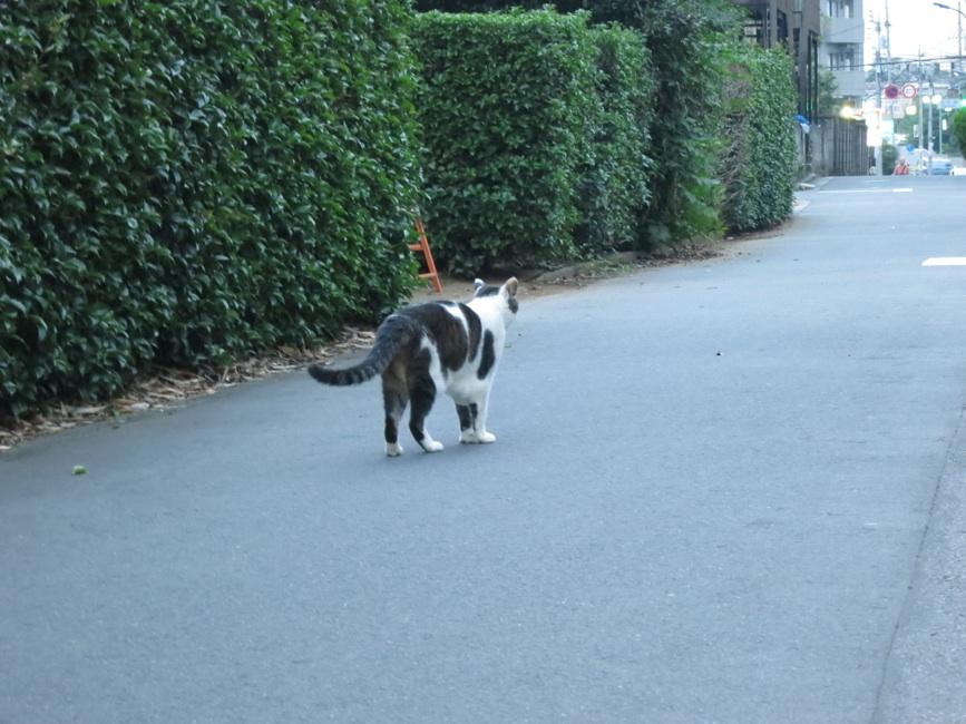 【猫】ノラ子ちゃん_f0141609_197833.jpg