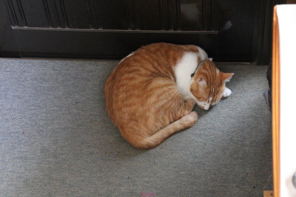 【猫】そんなところで_f0141609_752451.jpg