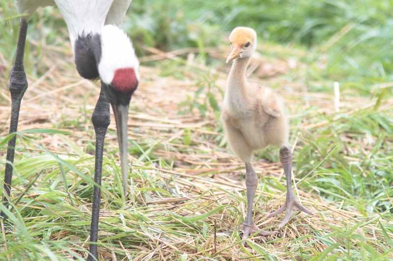 北海道の鳥さん②_f0100825_2056173.jpg