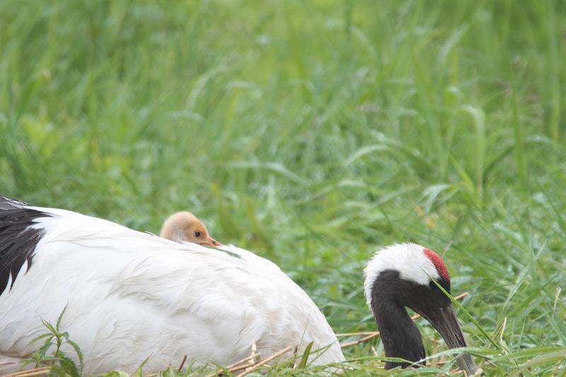 北海道の鳥さん②_f0100825_20562236.jpg