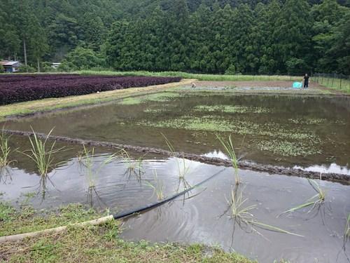 【飛鳥熊レス村】畑作業、ビオトープの畦を手塗り_c0010936_111445.jpg