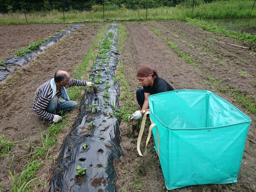 【飛鳥熊レス村】畑作業、ビオトープの畦を手塗り_c0010936_153980.jpg