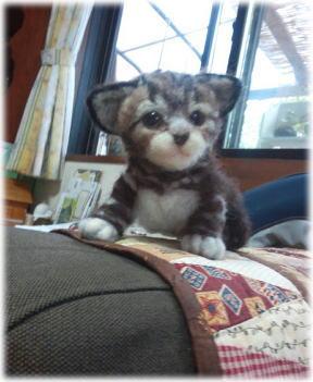 赤ちゃん猫_d0142770_00060702.jpg