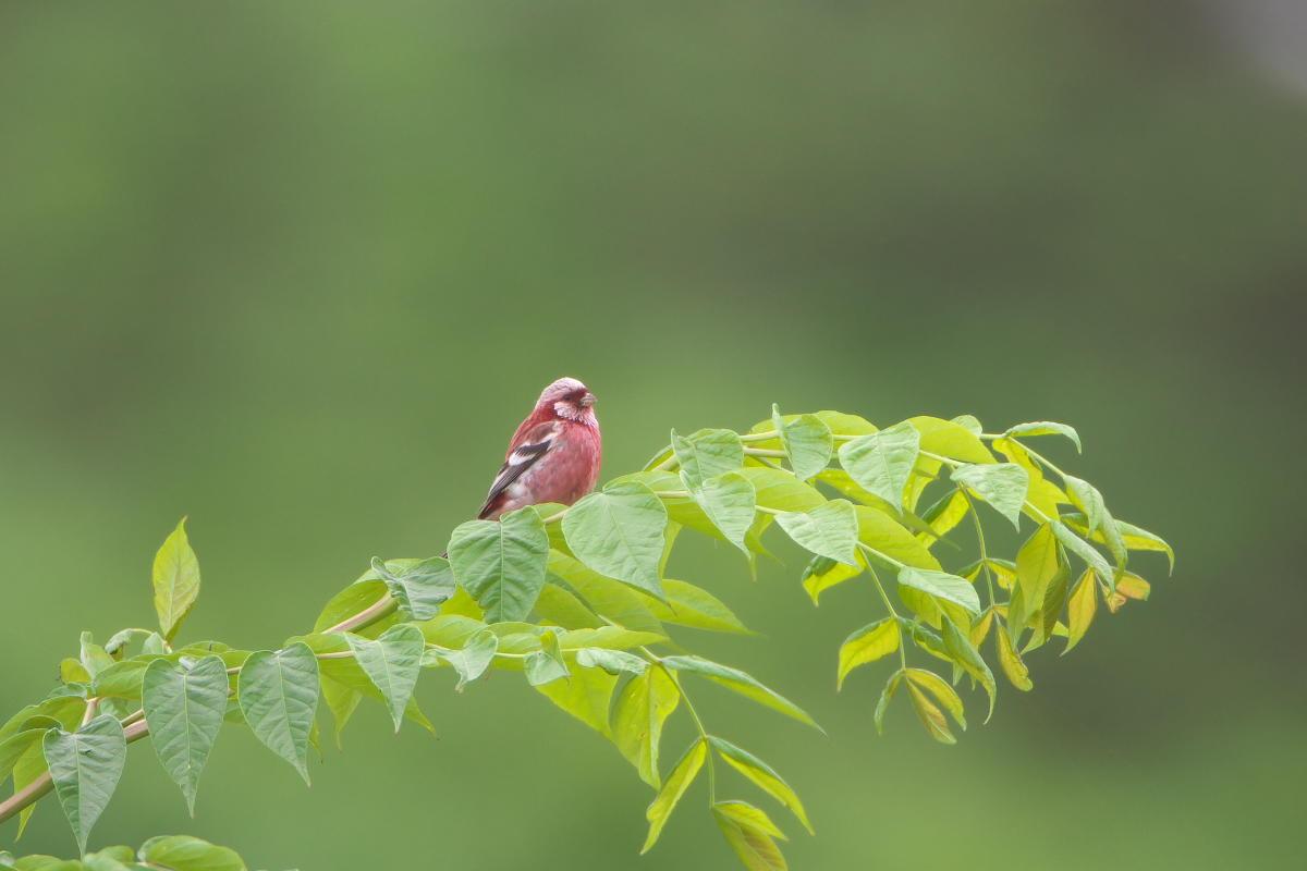 北海道の夏2014_オロロンラインのベニと..._d0125872_18363752.jpg