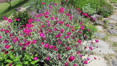 ロックガーデンの花たち18_b0219993_13224281.jpg