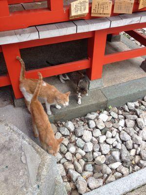 マクロ美に巡り会う日本滞在記_f0095325_2222283.jpg