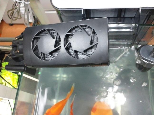 ラスト・ルピナス&金魚2日目_d0061857_1924128.jpg
