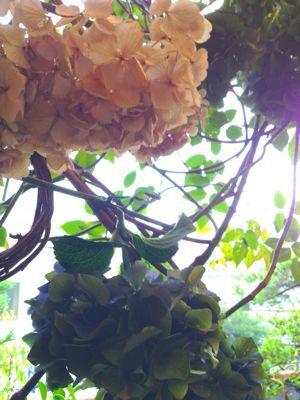 ドライの紫陽花♪_e0086864_1211277.jpg