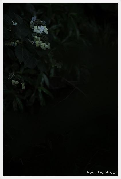 b0260373_21001352.jpg