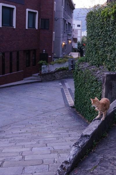 売れる長崎猫写真2_c0193077_12105178.jpg