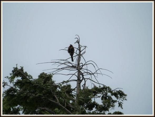初めての小鳥さん_c0228386_1121099.jpg
