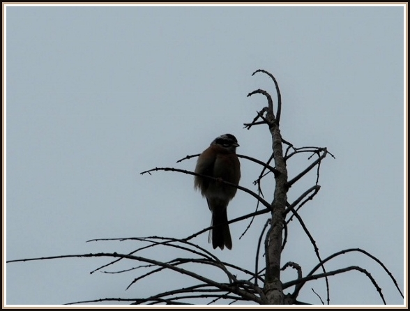 初めての小鳥さん_c0228386_1122085.jpg