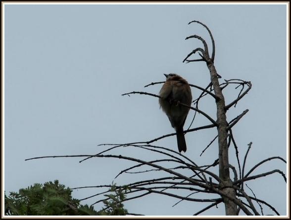 初めての小鳥さん_c0228386_11230100.jpg